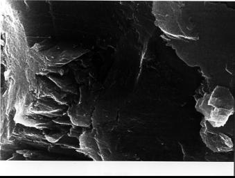 In the center of this electron microscope image of a small chip from a meteorite are several tiny structures that are possible microscopic fossils of primitive, bacteria-like organisms that may have lived on Mars more than 3.6 billion years ago.