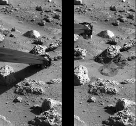 'Mister Badger' Pushing Mars Rock