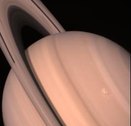 NASA's Voyager 2 returned this view of Saturn and its ring system Aug. 11, when the spacecraft was 13.9 million kilometers (8.6 million miles) away and approaching the large, gaseous planet at about l million km. (620,000 mi.) a day.