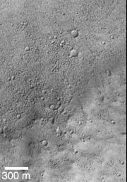 Mars Shoreline Tests: Contact between Lycus Sulci and Amazonis Planitia