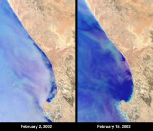 At Elands Bay in South Africa's Western Cape province, about 1000 tons of rock lobsters beached themselves during February 2002 when NASA's Terra satellite acquired these images.