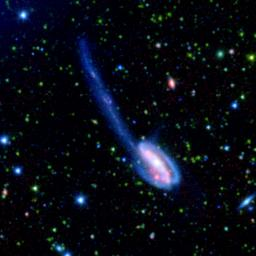 The Tadpole galaxy is the result of a recent galactic interaction in the local universe. These spectacular images were taken by NASA's Spitzer Wide-area Infrared Extragalactic (SWIRE) Legacy project.