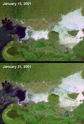 On January 26, 2001, when India's Republic Day is normally celebrated, a devastating earthquake hit the state of Gujarat. These two false-color images were acquired by NASA's Terra spacecraft before and after the event, on January 15 and 31.