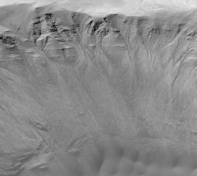 Gullies in a Crater Wall in Newton Basin: