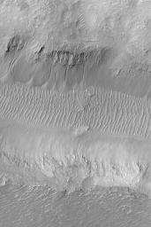 Gullies in Nirgal