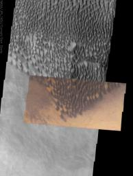 This image from NASA's 2001 Mars Odyssey released on Dec 26, 2003 shows the striking contrast between large, dark dunes and the surrounding surface at the southernmost edge of the Russel Crater dune field, located in heavily cratered terrain.