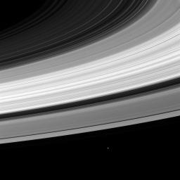 Janus and Rings