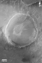 NASA's Mars Global Surveyor shows a very small gully example in a crater on Mars. Debris transported through the gullies was deposited on top of light-toned, windblown ripples on the floor of the crater.