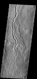 This lava channel is part of the Elysium Mons flows