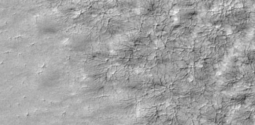 A delicate pattern, like that of a spider web, appears on top of the Mars residual polar cap, after the seasonal carbon-dioxide ice slab has disappeared