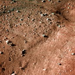 Icy, Patterned Ground on Mars