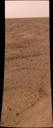 This image, one of the first captured by NASA's Phoenix Mars Lander, shows the vast plains of the northern polar region of Mars. The flat landscape is strewn with tiny pebbles and shows polygonal cracking.