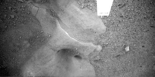 Martian Surface Beneath Phoenix Lander