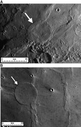 Wrinkle-Ridge Rings on Mercury and Mars