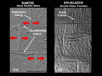 Spreading Ridge Transforms On Enceladus