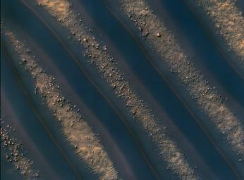 Dunes of sand-sized materials have been trapped on the floors of many Martian craters, as seen in this view captured by NASA's Mars Reconnaissance Orbiter. This is one example, from a crater in Noachis Terra, west of the giant Hellas impact basin.
