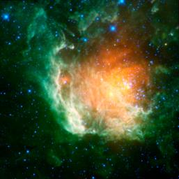 A new infrared image from NASA's Wide-field Infrared Survey Explorer shows a cosmic rosebud blossoming with new stars.
