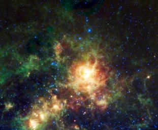 Sending chills down the spine of all arachnophobes is the Tarantula nebula, seen in this image from NASA's Wide-field Infrared Survey Explorer; the nebula is the largest star-forming region known in our entire Local Group of galaxies.