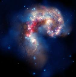 A new image of two tangled galaxies has been released by NASA's Great Observatories. The Antennae galaxies are shown in this composite image from the Chandra X-ray Observatory, the Hubble Space Telescope, and the Spitzer Space Telescope.