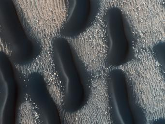 This observation from NASA's Mars Reconnaissance Orbiter shows the edge of a dark dune field on the floor of Proctor Crater in the Southern highlands of Mars. The dark dunes are composed of basaltic sand that has collected on the bottom of the crater.