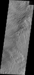 Eroded by countless years of wind action, the material in this region of Zephyria Planum is being sculpted into yardangs -- long, thin hills separated by narrow valleys. This image was captured by NASA's Mars Odyssey.