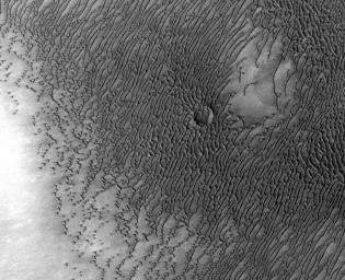 A vast dune field lies near the northern polar cap of Mars. Seen here in summer, the dunes have partially buried an impact crater about 1,000 (3,300 feet) wide. This image is from NASA's Mars Odyssey.