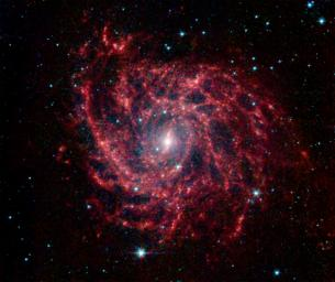 Looking like a spider's web swirled into a spiral, galaxy IC 342 presents its delicate pattern of dust in this infrared light image from NASA's Spitzer Space Telescope.