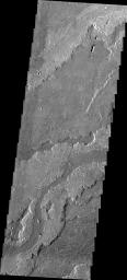 The volcanic flows that comprise Daedalia Planum arose from Arsia Mons. This image from NASA's 2001 Mars Odyssey spacecraft shows a small portion of Daedalia Planum, including a channel-fed lava flow.