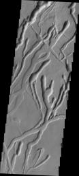 The many channels in this image captured by NASA's 2001 Mars Odyssey spacecraft are volcanic collapse features on the southern flank of Ascraeus Mons.