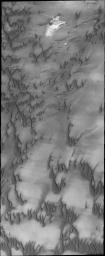 The dunes in this image from NASA's Mars Odyssey spacecraft are part of the dune field that encircles a large portion of the northern pole. There is less sand available in this region of the dune field, resulting in individual dunes rather than the dense