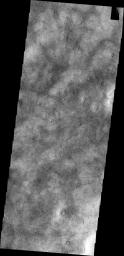 This image shows a portion of Utopia Planitia that is covered by dust devil tracks as seen by NASA's 2001 Mars Odyssey spacecraft.