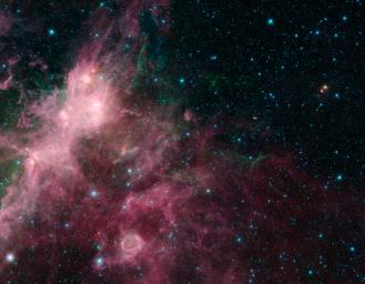 In what may look to some like an undersea image of coral and seaweed, a new image from NASA's Spitzer Space Telescope is showing the birth and death of stars.