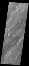 This image captured by NASA's 2001 Mars Odyssey spacecraft shows a small portion of the lava flows that comprise Daedalia Planum.