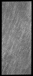 This image captured by NASA's 2001 Mars Odyssey spacecraft shows a portion of the huge dune field located at the north polar cap. As spring continues to deepen, the dunes are becoming darker and darker as they lose their winter frost cover.