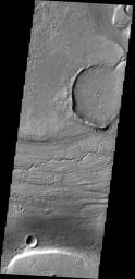 The channels, both large and small, in this image from NASA's 2001 Mars Odyssey spacecraft are part of Kasei Valles near its terminus in Chryse Planitia.