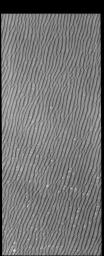 This image captured by NASA's 2001 Mars Odyssey spacecraft is part of Olympia Undae. Compare this to previous images and notice how uniform the dunes are in this region.