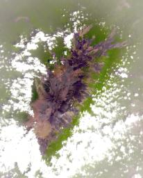NASA's Terra spacecraft shows Mount Cameroon, an active volcano in Cameroon near the Gulf of Guinea. It is one of Africa's largest volcanoes, rising over 4,000 meters, with more than 100 small cinder cones.