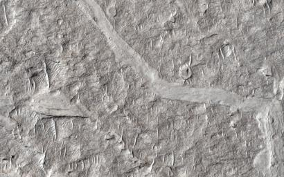 This image from NASA's Mars Reconnaissance Orbiter spacecraft shows numerous branching ridges with various degrees of sinuosity. These branching forms resemble tributaries funneling and draining into larger channel trunks towards the upper portion.