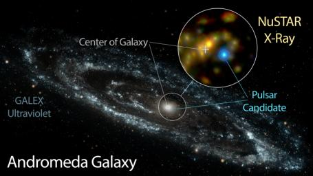 NASA's NuSTAR has identified a candidate pulsar in Andromeda, the nearest large galaxy to the Milky Way. This likely pulsar is brighter at high energies than the Andromeda galaxy's entire black hole population.