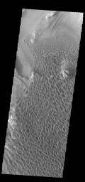 This image captured by NASA's 2001 Mars Odyssey spacecraft was collected simultaneously with yesterday's IR image. It shows part of the dune field on the floor of Rabe Crater.