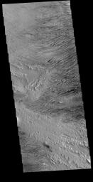 This image from NASA's Mars Odyssey is located near Zephyria Planum. Winds of two different directions have excavated a poorly cemented surface into linear ridge features called yardangs.