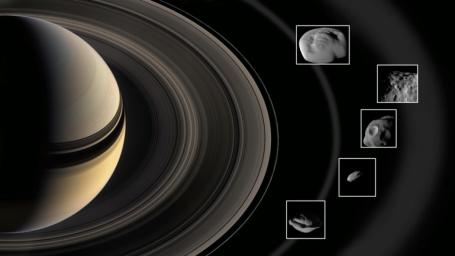 This graphic shows the ring moons inspected by NASA's Cassini spacecraft in super-close flybys. The rings and moons depicted are not to scale.