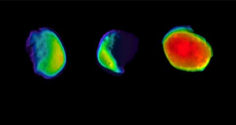 These three views of the Martian moon Phobos were taken by NASA's 2001 Mars Odyssey orbiter using its infrared camera, THEMIS.