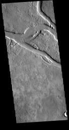 This image from NASA's Mars Odyssey shows a section of Granicus Valles, one of several channel systems that originate near the western margin of the Elysium Mons volcanic complex.