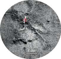 click here for larger view of figure 1 for PIA16615