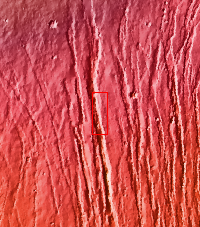 Context image for PIA18235