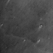 Cerberus, seen in this image from NASA's Mars Odyssey spacecraft, is a dark region on Mars that has shrunk down from a continuous length of about 1000 km to roughly three discontinuous spots a few 100 kms in length in less than 20 years.