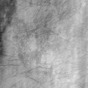 This image from NASA's Mars Odyssey spacecraft displays dust devil tracks on the surface of Mars. Most of the lighter portions of the image likely have a thin veneer of dust settled on the surface.