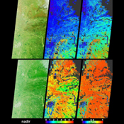 Vigorous vegetation growth in the Southern United States after heavy rains fell during April and early May, 2004, is quantified in these images and data products from NASA's Terra spacecraft.