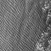 This image from NASA's Mars Odyssey spacecraft shows relatively dark coarse grained material forming individual dunes coalescing into a relatively uniform sand sheet.